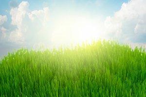 rising sun and green grass under blue sky
