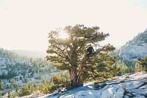 Yosemite Tree