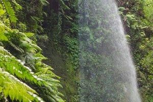 Los Tilos waterfall (La Palma)