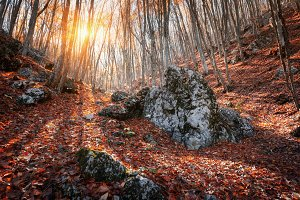Autumn landscape in forest at sunset