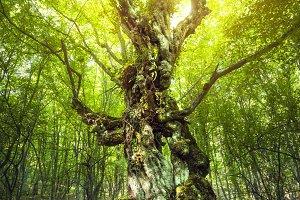 Magic forest. Summer landscape