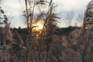 details of dried plants at sunset