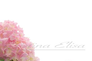 Pink Flower Styled Stock Photography