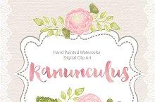 Watercolor ranunculus