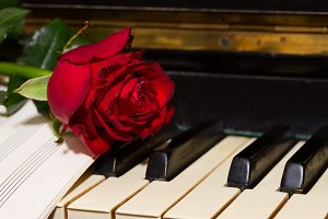 red rose with notes paper on piano