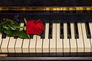 Rose and piano keys