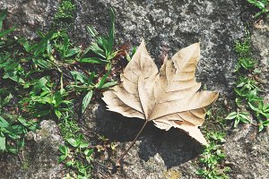 Autumn Leaves Background #2
