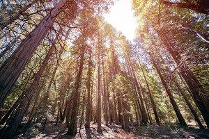 Yosemite day3 11.jpg