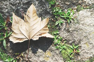 Autumn Leaves Backgrounds Pack