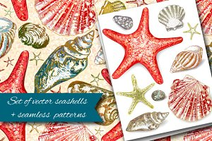 Vector seashells + cards + patterns
