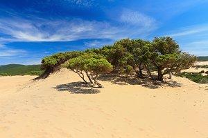 Piscinas dune - Sardinia, Italy