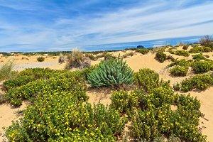 Sardinia - flowered dune in Piscinas