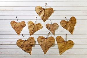 autumn leaves with heart design