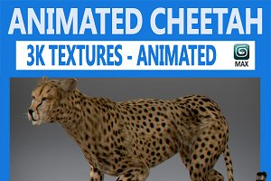 Animated Cheetah