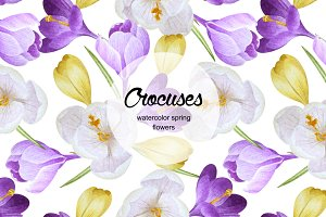 Watercolor spring crocuses