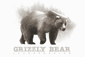 Grizzly Bear 2 Illustration