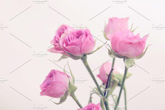 Rose bouquet. Vintage retro style. - Nature