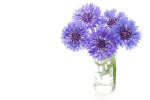 Blue cornflower. Flower bouquet