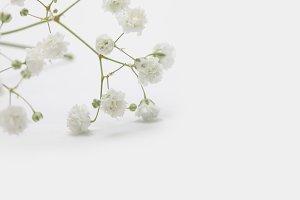White flower on light background.
