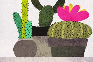 succulents and cactuses