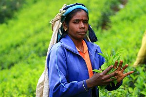 Woman in tea plantation (portrait)