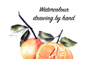 Hand drawn watercolor painting