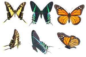 Set of tropical butterflies