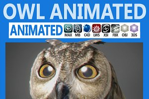 Animated Owl