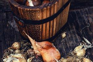 seedlings in wooden bucket