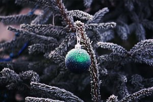 Christmas ball on frosted fir-tree