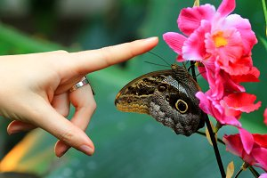Butterfly on a flower and hand