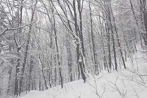 Snowy Trees 01