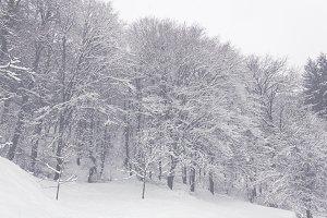 Snowy Trees 02