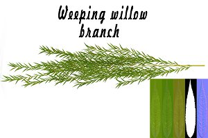 Weeping willow branch