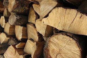 Sliced tree trunks