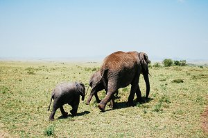 Elephant family on a walk in Kenya