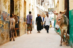 Narrow african street in Lamu island