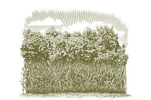 Woodcut Corn Plants