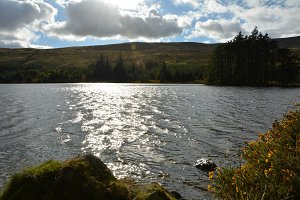 Sunlight on a lake