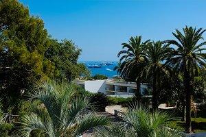 Monaco yachts and palms