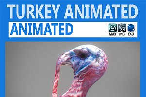 Animated Turkey
