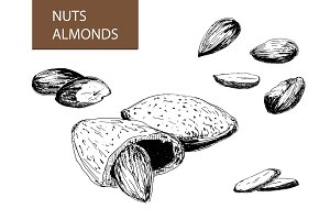 Nuts. Almonds. Set of illustrations.