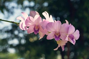 orchid with bokeh as background