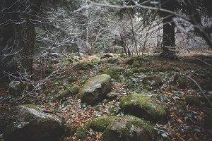 Winter stones