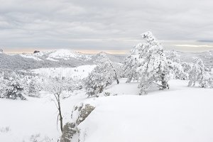 Snow covered trees on Ay Petri