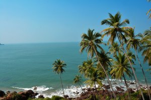 Coconut Trees at Beach