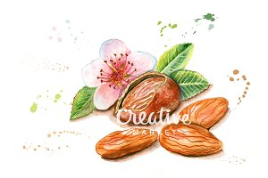 Almond watercolor