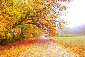 Autumn park view