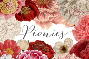 Vintage Peonies clipart and brushes