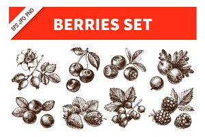 Hand Drawn Sketch Berries Vector Set